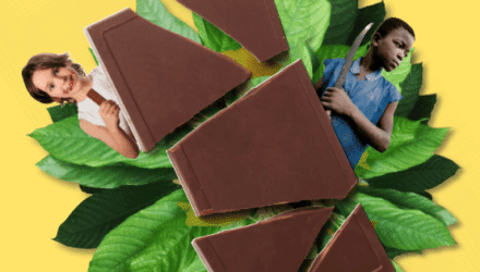 Cacaobrochure