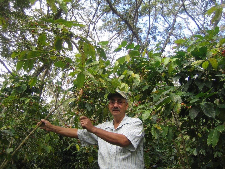 Comsa uit Honduras