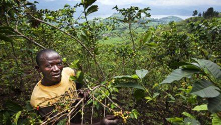 Sopacdi uit DR Congo