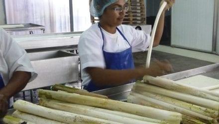 Apropal: coöperatie met palmhart en ziel Oxfam artikel