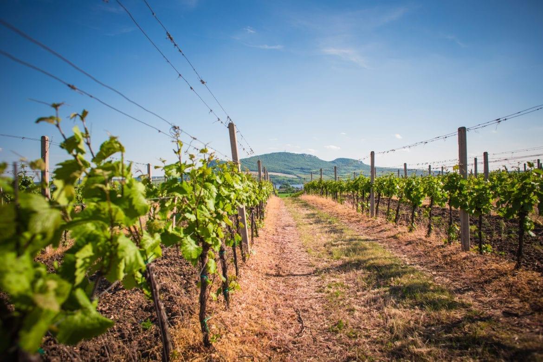 Biologische wijnen Oxfam artikel