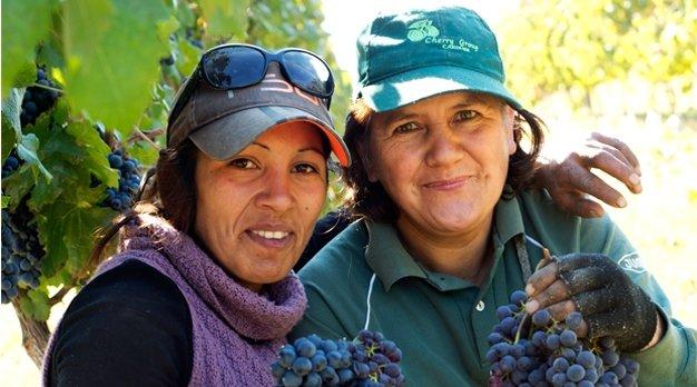 Biologische wijnen uit Chili Oxfam artikel
