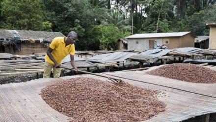 De doelstellingen van de cacaosector zijn duidelijk