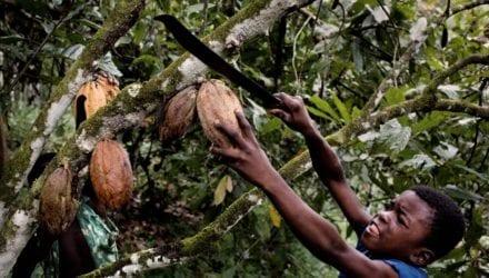 De drie uitdagingen in de cacaosector Oxfam artikel