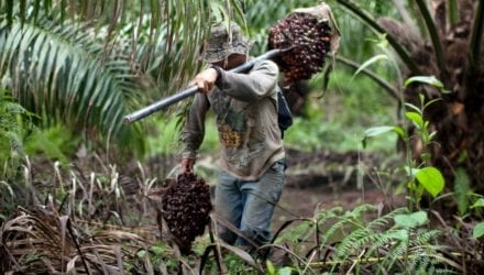 De mythe van duurzame palmolie Oxfam artikel
