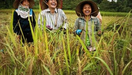De rijke erfenis van Laos Oxfam artikel