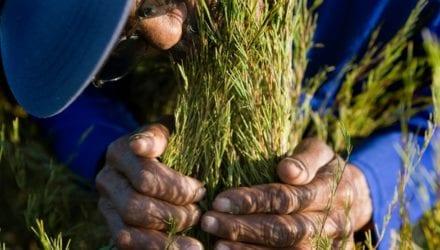 Eerlijk handelsbeleid nodig om kleinschalige producenten te beschermen tegen klimaatverandering.
