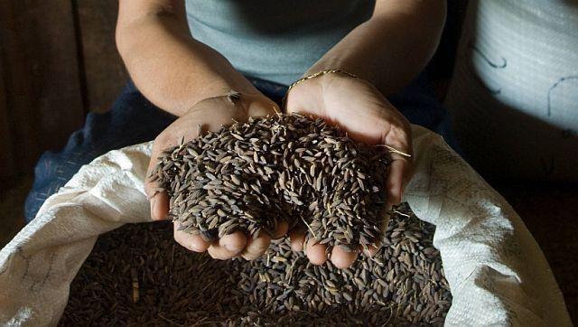 Het grote Europa en de kleine rijstkorrel Oxfam artikel