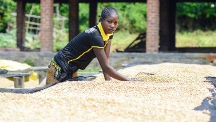 Instabiele situatie bedreigt certificering van Congolese koffie. Oxfam artikel