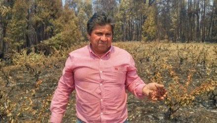 Partnerfonds steunt door brand getroffen wijnboeren in Chili Oxfam artikel