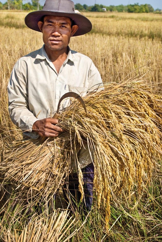 Rijstschatten uit Laos Oxfam artikel