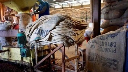 Traceerbare cacao uit Ivoorkust Oxfam artikel