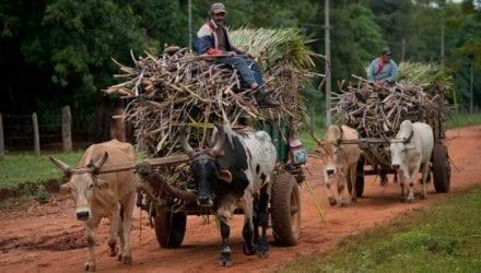 Universitaire studies betalen met fairtradesuiker Oxfam artikel