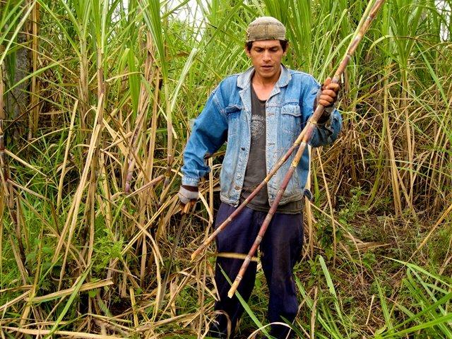Waarom kiest Oxfam-Wereldwinkels voor suiker uit Paraguay? Oxfam artikel